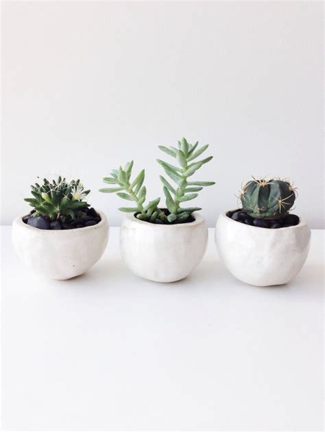 white pot 25 best ideas about white planters on