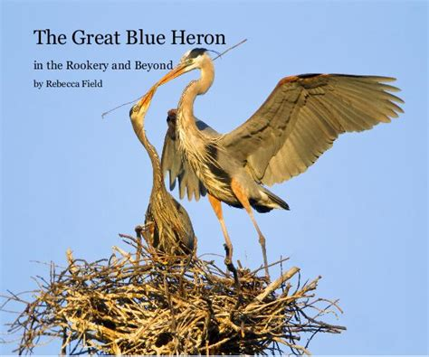i asked the blue heron books the great blue heron by field blurb books