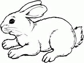 coloriage de lapin a sur l ordinateur 1001 animaux