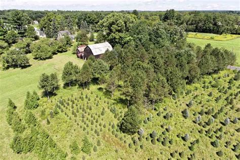 8 christmas tree farm homes for sale life at home