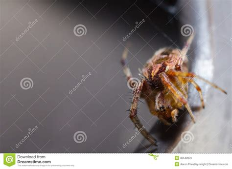 Macro Me - scary spider royalty free stock image image 32543976