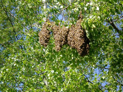 come allontanare le api dalle persiane come difendersi dalle api in giardino notizie it