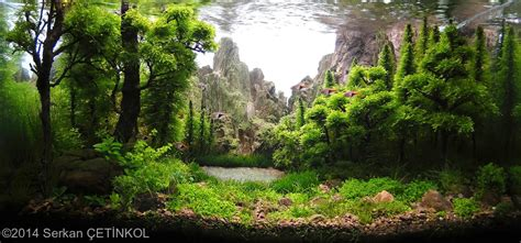 aquascape forest style 2014 aga aquascaping contest 320