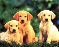 Dogs images doggies