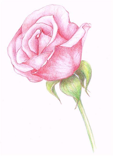 pink drawing rose drawings in pencil drawings a pink rose