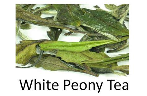 Teh Putih teh putih white tea indonesia manfaat teh putih