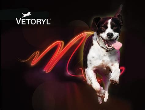 vetoryl for dogs the treatment of hyperadrenocorticism in dogs vet times