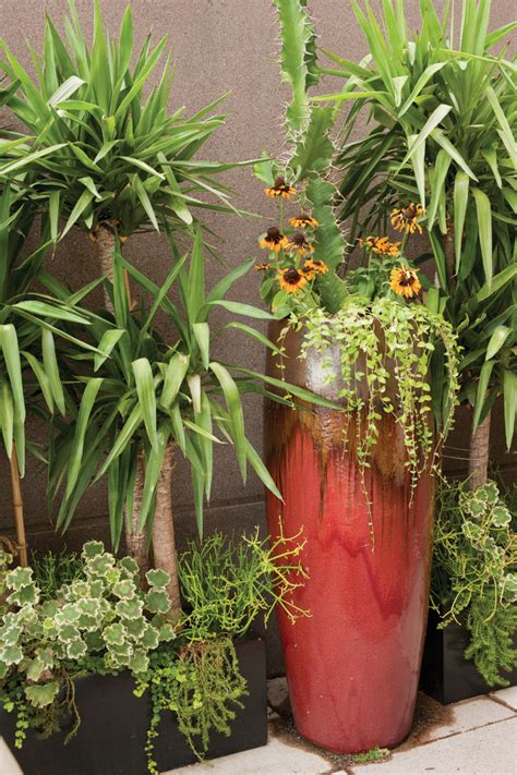 beautiful low maintenance outdoor potted plants part 1