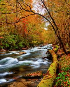 smoky mountain fall colors october s pallette smoky mountain photography by smoky
