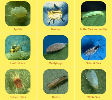 types of garden pests your enemy