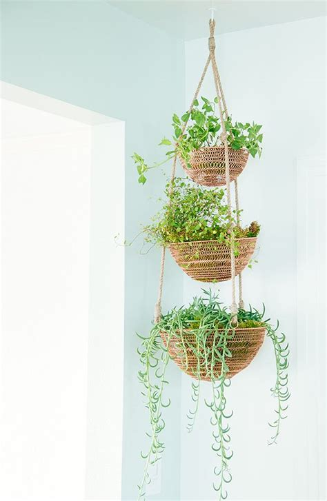 Hanging Plants Indoor 25 Best Ideas About Indoor Hanging Plants On