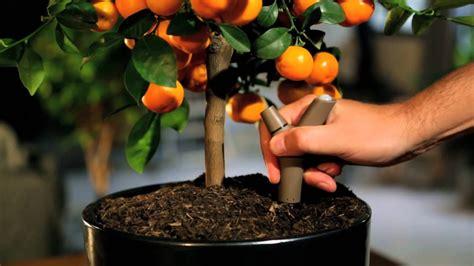 5 big and beautiful indoor plants flower power parrot flower power bluetooth indoor outdoor plant sensor