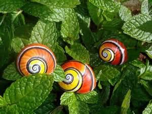 Painted snail Polymita picta   Art Kaleidoscope