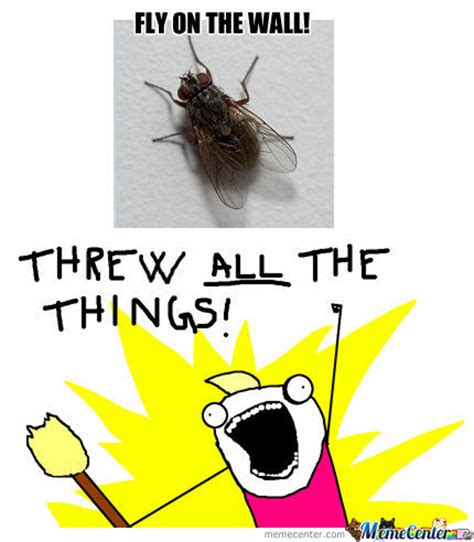 Fly Meme - fly on the wall by carebear meme center
