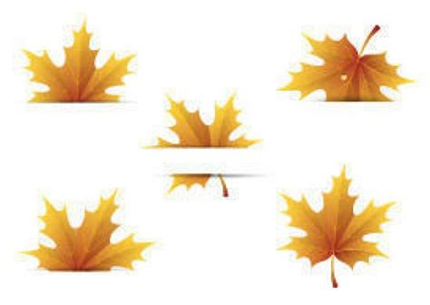 Autumn Leaves On White Background Vector Free Download Fall Leaves On White Background