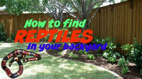 how to find reptiles in your backyard youtube gogo papa