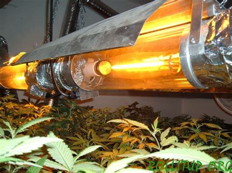 high pressure sodium hps lights  weed scene