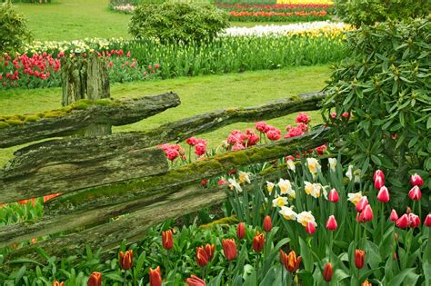 Beautiful Flower Garden Wallpaper Beautiful Flower Garden Flower Forest Cool Wallpapers Wonderful Flower Garden Part 2