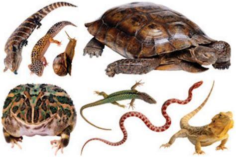 imagenes animales reptiles fotos animales reptiles imagui
