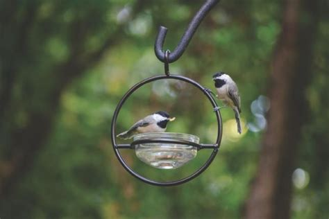 backyard birds salt lake city 25 best ideas about wild birds unlimited on pinterest