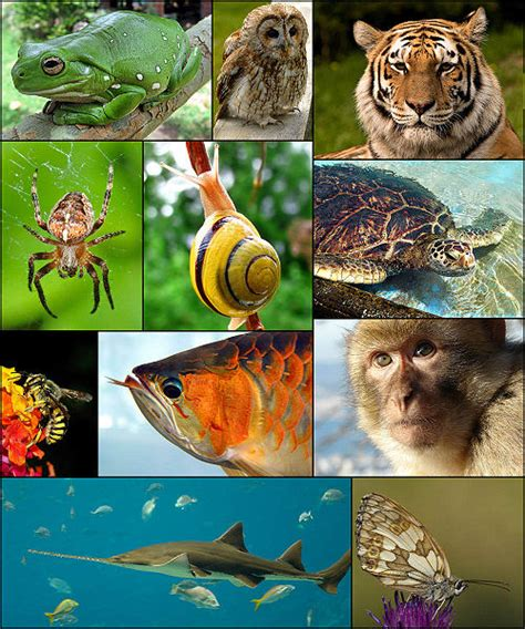 definition of animal biology a definition for zoology
