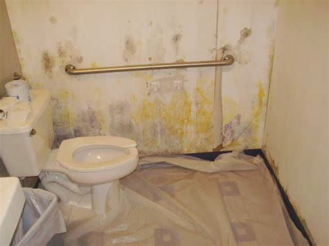 moldy bathroom toxic black mold bathroom www pixshark com images