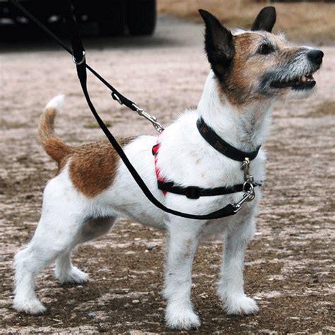 halti harness customer reviews for halti harness petplanet co uk