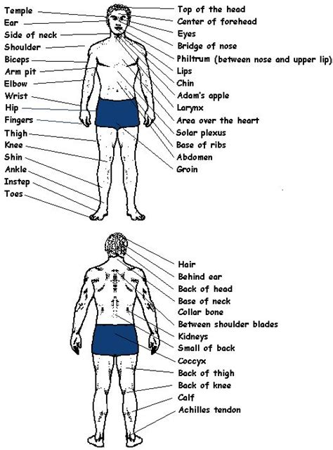 diagram of pressure points on the human 17 best images about pressure points on