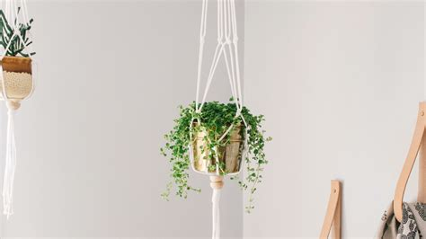 How To Macrame A Plant Hanger - this diy macram 233 plant hanger