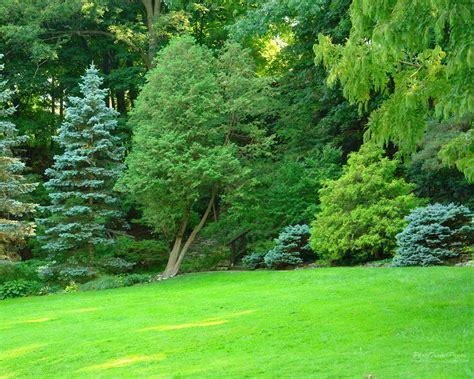 Green Garden by Hd Garden Wallpaper Wallpapersafari