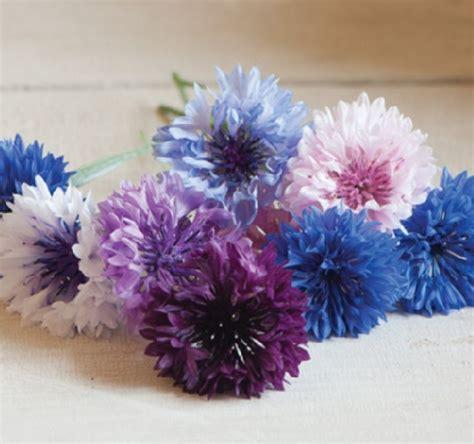 Kelopak Bunga Biru Mix Putih Id26 benih centaurea standard mix 100 biji non retail