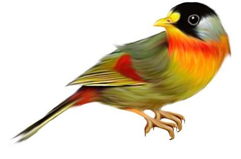 imagenes de aves sin fondo imagens fundo transparente p 225 ssaros imagens png fundo
