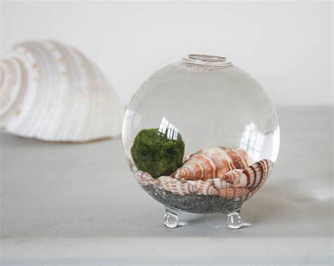 Vase Terrarium by Handblown Glass Vase Mini Terrarium By Bonnie And Bell