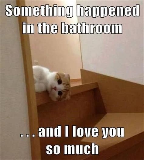 So In Love Meme - top 30 funny cat memes quotes and humor