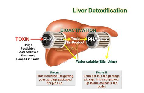 Took Liver Detox Pill And Back Started To Itch by Detoxification Programs Kohll S Pmc