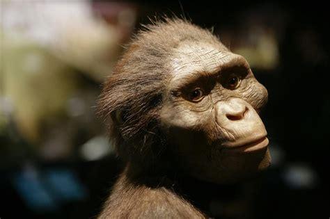 biografia de animal lucy la australopithecus m 225 s famosa del mundo