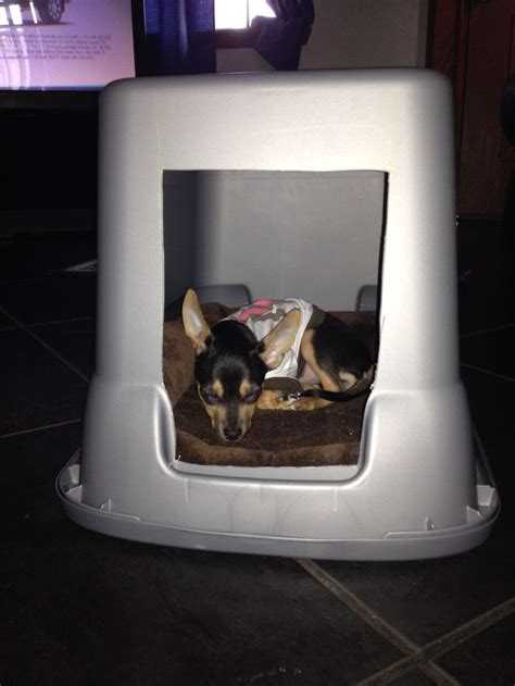 inexpensive dog houses pin by sibia mart 237 nez on pets pinterest