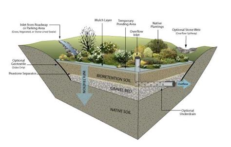 rain garden section rain garden cross section environmental services kiosk