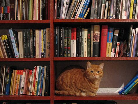 wallpaper cat book the world s most famous library cat