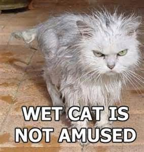 Wet Cat Meme - image 25885 trashcat is not amused know your meme