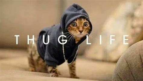 hilarious dog  cat thug life   million dogs