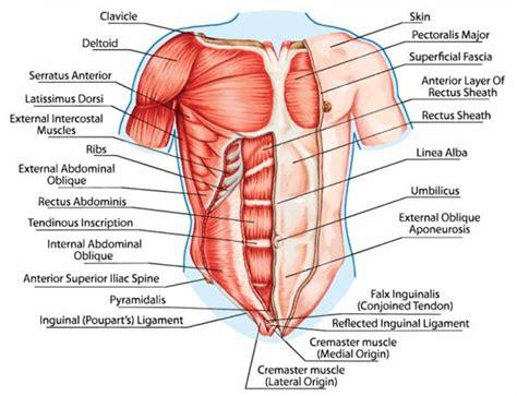create muscular balance  unilateral training breaking muscle