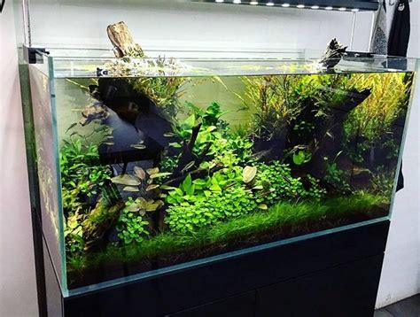 setup aquascape 17 best images about aq aquascape on pinterest planted