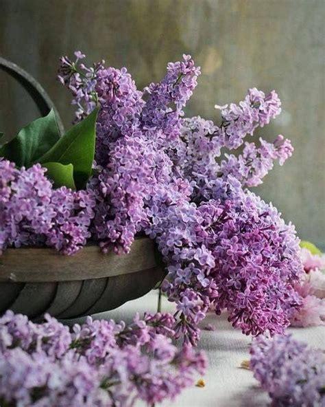 imagenes de flores interactivas mejores 2110 im 225 genes de flora en pinterest arreglos