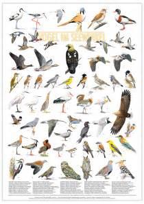 seltene vögel im garten general allgemein birding and bird photography leander