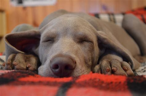tlc puppy pet boarding tlc pet care centers is like a second home for your pet tlc pet care