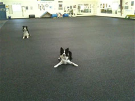 rubber matting for kennels kennel and daycare rubber flooring