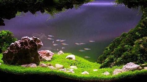 keren  pemandangan alam  aquascape foto