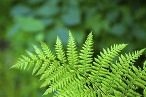non flowering shrubs list of non flowering plants hunker