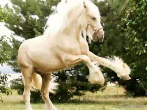 fotos penes finos y largos los 10 caballos mas caros y bonitos del mundo youtube